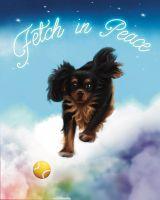 Fetch in Peace